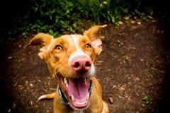 Gelukkig jong hondportret Royalty-vrije Stock Foto