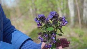Gelukkig kind die een boeket van wildflowers houden Een gift van mijn moeder terwijl het lopen in het Park Gelukkige familie, het stock footage