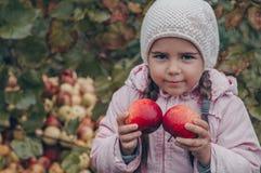 Gelukkig kind die rode appelen in zijn handen houden Oogst Grappig jong geitje in openlucht in de herfstpark stock foto