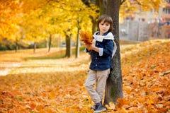Gelukkig kind, jongen, die in het park spelen, werpend bladeren, het spelen Royalty-vrije Stock Foto