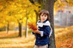 Gelukkig kind, jongen, die in het park spelen, werpend bladeren, het spelen Royalty-vrije Stock Foto's