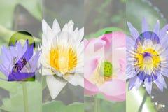 Gelukkig Nieuwjaar 2016 in Lotus Flower Theme Royalty-vrije Stock Foto's