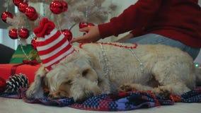 Gelukkig paar met hond, allen die in Kerstmiskleren dichtbij Kerstboom zitten stock video