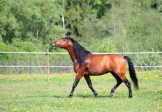 Gelukkig paard lopen vrij op landbouwbedrijf Royalty-vrije Stock Foto's