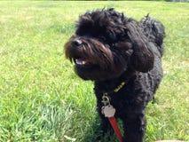 Gelukkig puppy Stock Foto