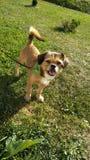 Gelukkig puppy op het gebied op een zonnige dag stock foto