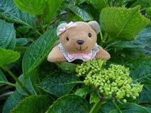 Gelukkig Teddy Bear op de Hydrangea hortensiaknoppen Royalty-vrije Stock Afbeelding