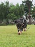 Gelukkig weinig zwarte hond stock afbeelding