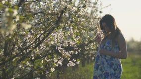 Gelukkig zwanger meisje die in mooie kleding in zonnig de lentepark bij zonsondergang lopen stock video
