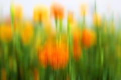 Gelukkige abstracte natuurlijke kleurenachtergrond Onscherpe achtergrond van de tuin van goudsbloembloemen Exemplaarruimte voor o royalty-vrije stock foto