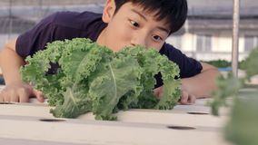 Gelukkige Aziaat weinig jongen met een groene salade voor gezonde voeding, uitdrukken gelukkig om groenten te eten stock footage