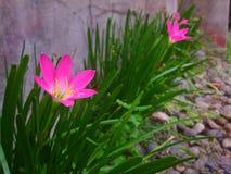 Gelukkige bloeminstallatie in rij Stock Foto's