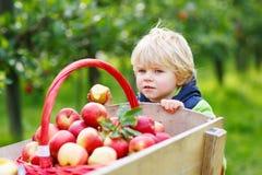 Gelukkige blonde peuter met houten karretjehoogtepunt van organische rode appl Royalty-vrije Stock Foto