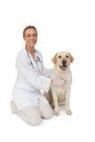 Gelukkige dierenarts die de gele hond die van Labrador petting bij camera glimlachen Stock Afbeeldingen
