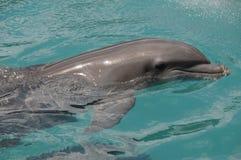 Gelukkige Dolfijn Royalty-vrije Stock Foto's