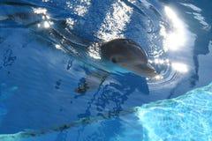 Gelukkige Dolfijn Stock Afbeelding