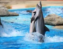 Gelukkige dolfijnen Royalty-vrije Stock Foto's