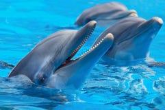 Gelukkige dolfijnen stock foto's