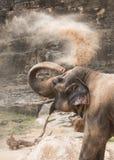 Gelukkige Dustbath - de Olifant Stock Afbeeldingen