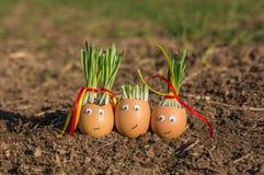 Gelukkige eieren Stock Foto