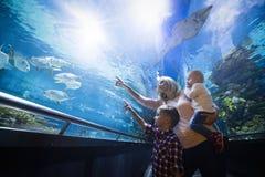 Gelukkige familie die vissentank bekijken bij het aquarium Stock Foto's