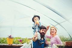 gelukkige familie in serre Vader die in blauw vest zijn zoon op schouders houden Leuk jong geitje die in hoed appel eten terwijl  stock afbeeldingen