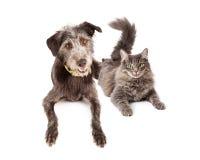 Gelukkige Grey Cat en Hond die samen leggen Royalty-vrije Stock Foto's