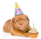 Gelukkige het glimlachen Bordeaux puppyhond met verjaardagshoed en cake Geïsoleerde Stock Foto's