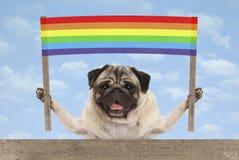 Gelukkige het glimlachen pug puppyhond met het kleurrijke teken van de regenboogbanner stock afbeelding
