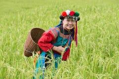 Gelukkige heuvelstam in kleurrijke het kostuumkleding van het padiepadieveld Stock Afbeelding