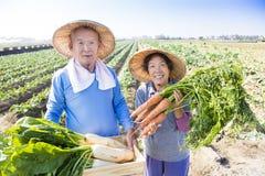 Gelukkige hogere landbouwer met heel wat in hand wortelen Stock Afbeeldingen