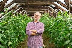 Gelukkige hogere mens bij landbouwbedrijfserre Royalty-vrije Stock Fotografie