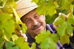 Gelukkige hogere wijnhandelaar stock afbeeldingen