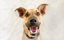 Gelukkige Hond royalty-vrije stock afbeeldingen