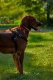 Gelukkige hond royalty-vrije stock foto's