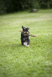 Gelukkige hond Stock Afbeelding