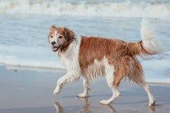 Gelukkige hond bij de overzeese kust Royalty-vrije Stock Afbeelding