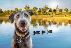 Gelukkige Hond bij Park in de Zomer Stock Fotografie