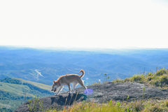 Gelukkige hond die in de bergen wandelen Stock Foto's