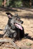 Gelukkige hond die op de grond in bos ligt Stock Foto