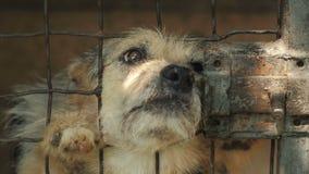 Gelukkige hond in een kooi stock videobeelden