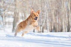 Gelukkige hond in een vlucht Stock Foto