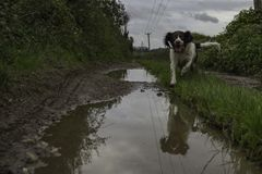 Gelukkige hond in modderige vulklei Royalty-vrije Stock Fotografie