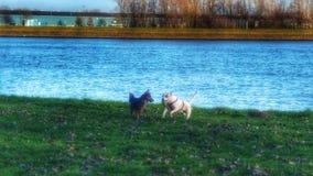 Gelukkige Honden Stock Afbeeldingen