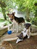 Gelukkige hondenfamilie stock fotografie