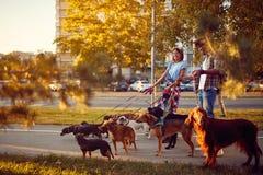 Gelukkige hondleurder die met een groepshonden lopen in de stad royalty-vrije stock fotografie