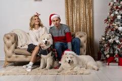 Gelukkige houdende van jongeren en honden die dichtbij de Kerstboom stellen stock afbeeldingen