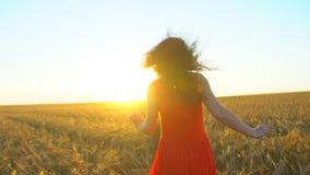 Gelukkige jonge Spaanse mooie vrouw die op tarwegebied lopen in de zonsondergangzomer De reis van het het geluktoerisme van de vr stock video