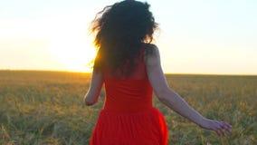 Gelukkige jonge Spaanse mooie vrouw die op tarwegebied lopen in de zonsondergangzomer De reis van het het geluktoerisme van de vr stock footage