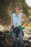Gelukkige jonge vrouwen dragende olijven in mand bij landbouwbedrijf Royalty-vrije Stock Afbeeldingen